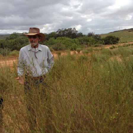 แลมเบิร์ตส์เบย์, แอฟริกาใต้: Chris's informative rooibos tour.