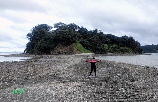 Warkworth, Nuova Zelanda: crossing path at low tide to Casnell Island