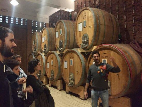 Sinio, Italy: In the cellar