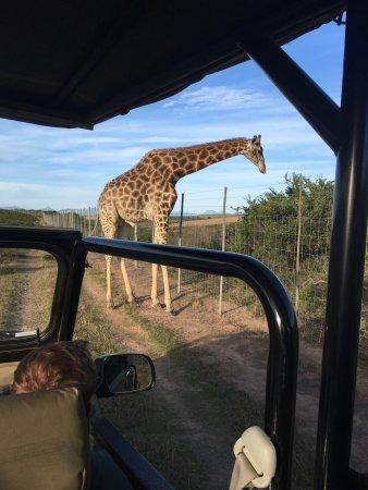 Albertina, Sudáfrica: photo2.jpg