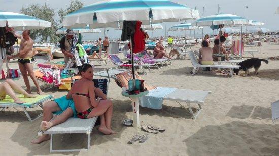 Vacanza Spiaggia Cani Rimini Bagno Egisto 38 Foto Di