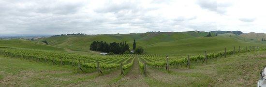 Waipawa, Nueva Zelanda: Lime Rock Wines panoramic view