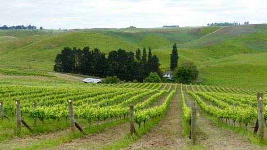 Waipawa, Νέα Ζηλανδία: Lime Rock Wines