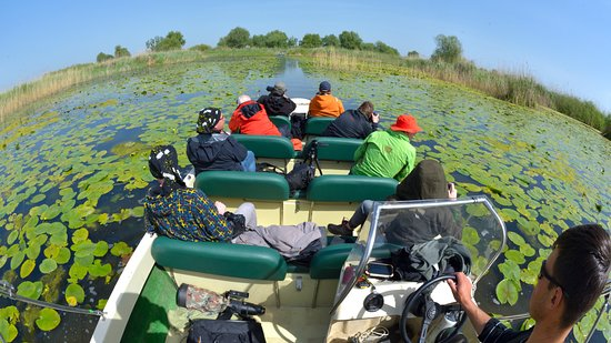 Tulcea, Rumänien: Discover Danube Delta with us, on safe open boats and the best guide's team