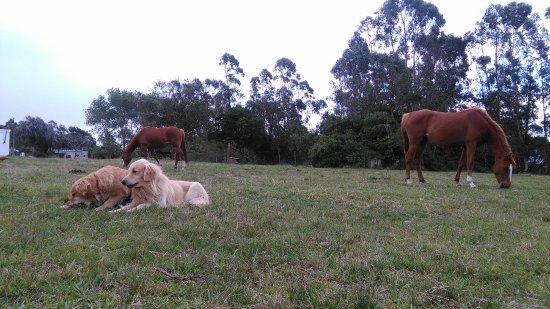 La Pedrera, Uruguay: Godiva y Loren una vez desensilladas; Nanuk y Sancho, los perros del lugar =)