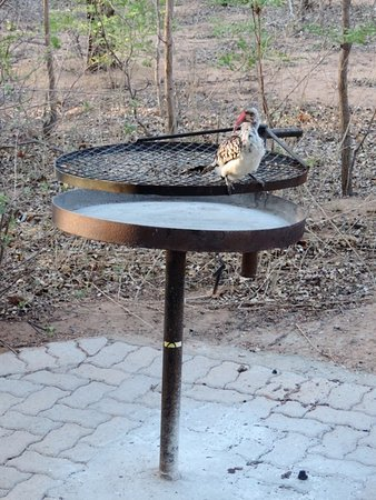 Thabazimbi, Zuid-Afrika: A hornbill sitting on our braai to welcome us
