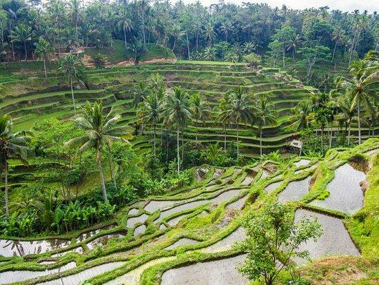 Ταμπανάν, Ινδονησία: Nira Bali tour