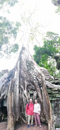 Angkor Wat: How nature and history combine!