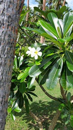 Vanua Levu, Fiyi: 20171106_094711_large.jpg