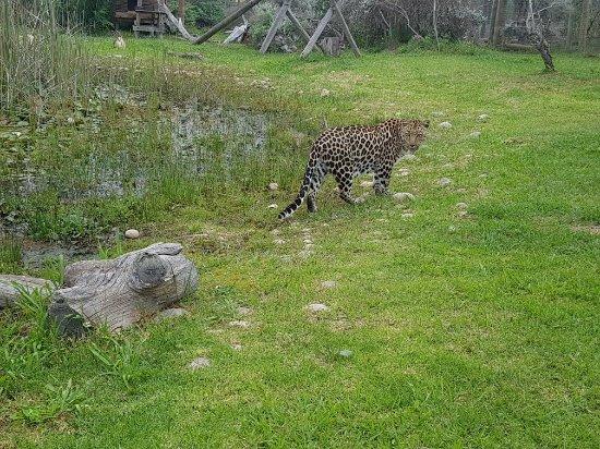 Tenikwa Wildlife Awareness Centre: 20171121_120500_large.jpg