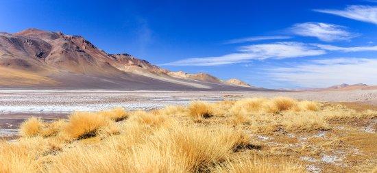 Chile: Salar de Tara