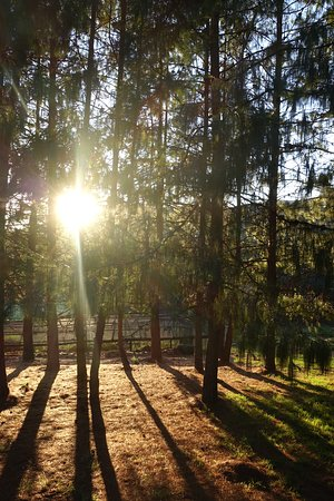 Lydenburg, South Africa: Early morning in the forest