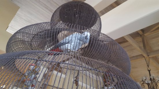 Melia Coco Beach: pretty bird