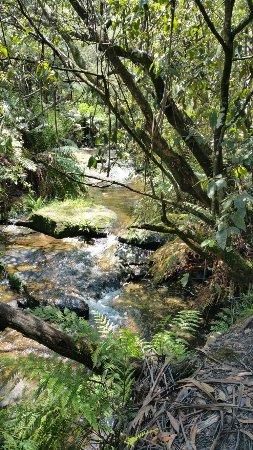 Leura, أستراليا: 20171128_130916_large.jpg
