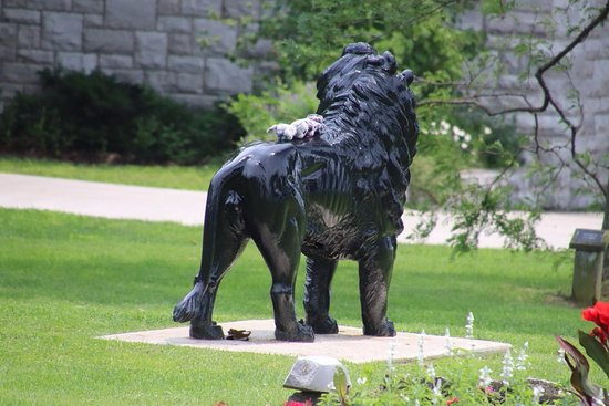 Gaskin Lion