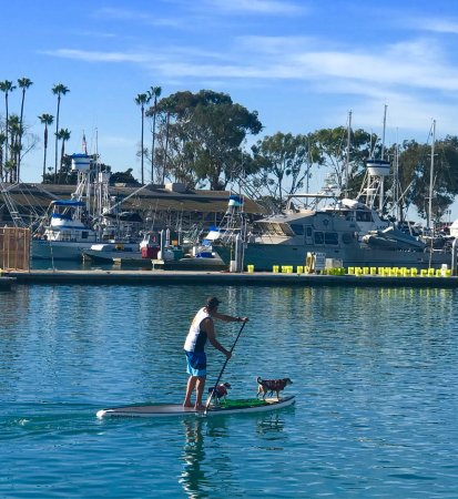 DANA POINT HARBOR, CA, 🐶🐶's ❤️to Paddle Board too!