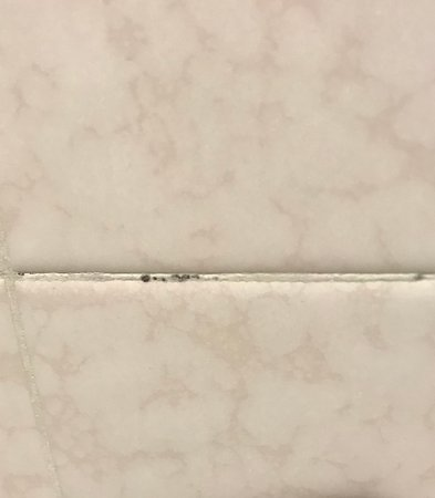 Hyatt Regency North Dallas/Richardson: Moldy tile