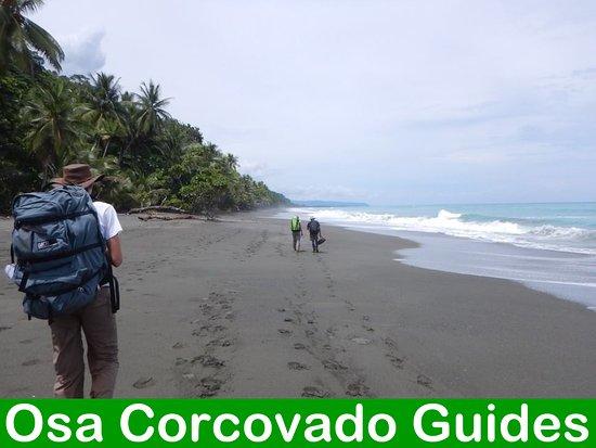 Puerto Jimenez, Costa Rica: Osa Corcovado Guides