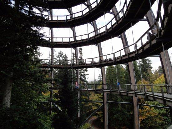 Baumwipfelpfad Bayerischer Wald: Baumwipfelpfad Bavarian Forest