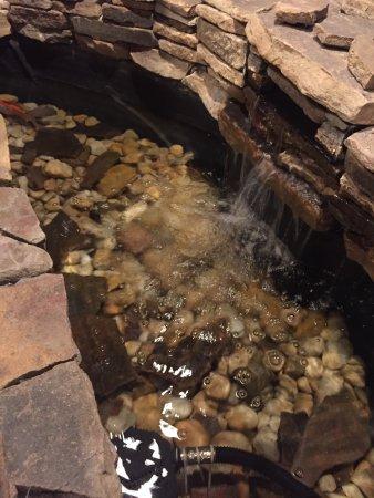 Wyndham Garden Newark Airport: Waterfall with fish
