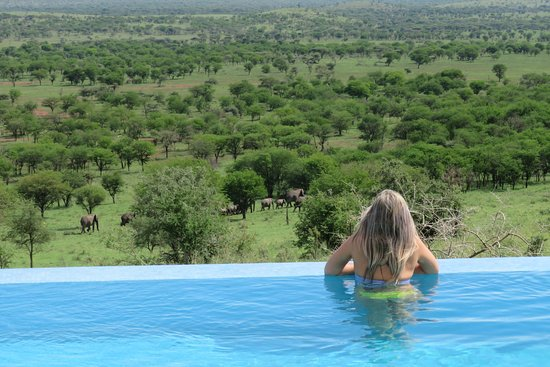 Shadows of Africa: Watching the elephants go by from our lodge in Serengeti!