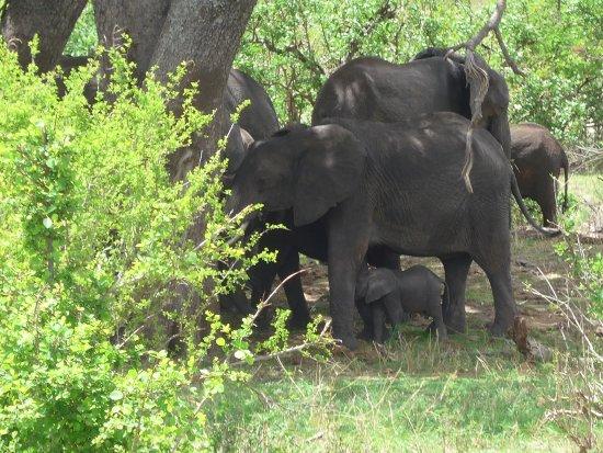 Shadows of Africa: Baby elephant!