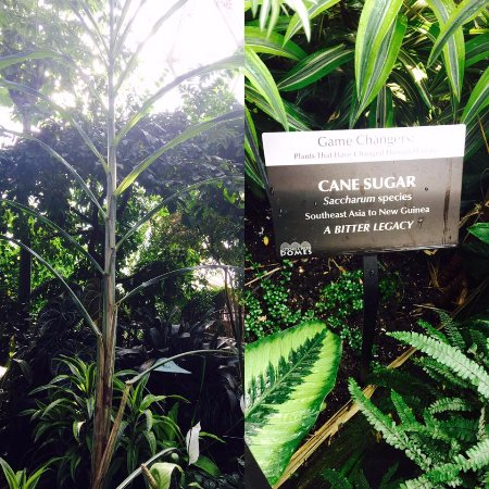 Mitchell Park Horticultural Conservatory (The Domes): Cane Sugar in the Tropical Dome