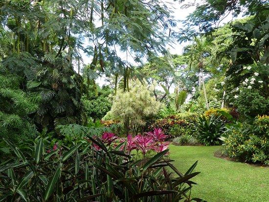 Photo5 Jpg Picture Of Jardin Botanique De Deshaies Deshaies
