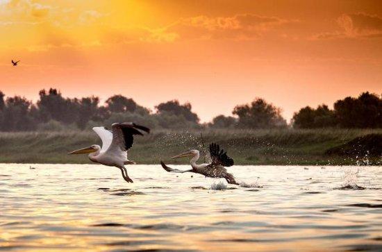 Experiência Safari no Delta do Danúbio