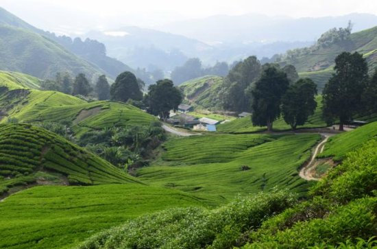 Cameron Highlands, Garden of Nature