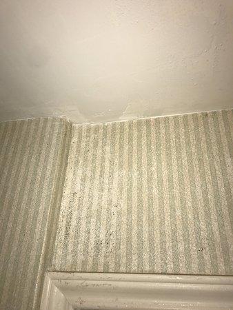 Staybridge Suites Detroit-Utica: All the black spots are mold!