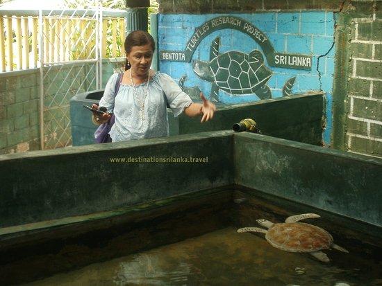 Destination Sri Lanka: Turtle Hatchery
