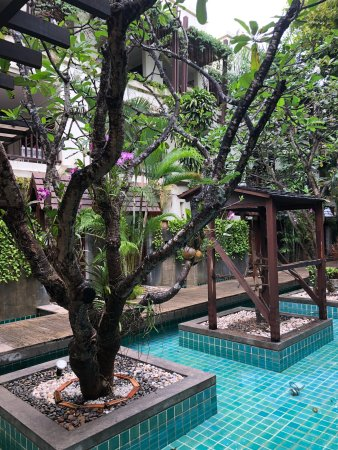 Tranquil Getaway in the heart of Patong