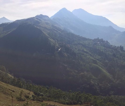 Munnar Trekking Adventure: Munnar, scenery where 1 day trip heads(?)