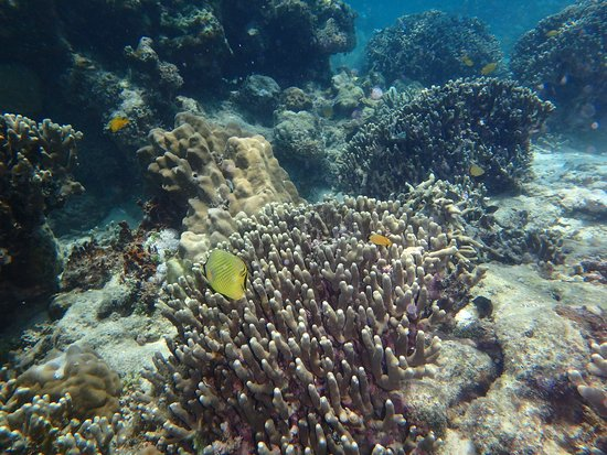Rabaul - Kokopo Dive: snorkelling over the WWII plane wreck