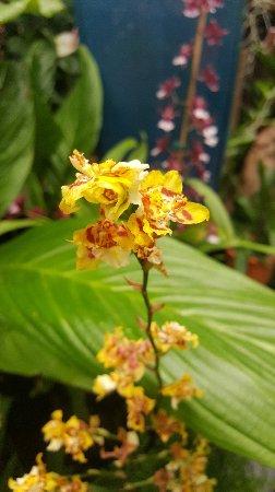 Hervey Bay Botanic Gardens: Lovely orchids