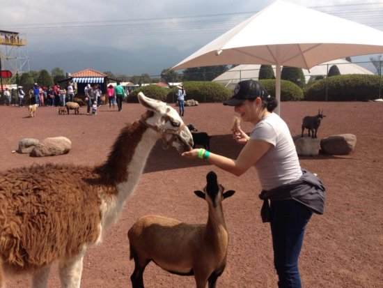 Hacienda Panoaya: Feeding wild and farm animals