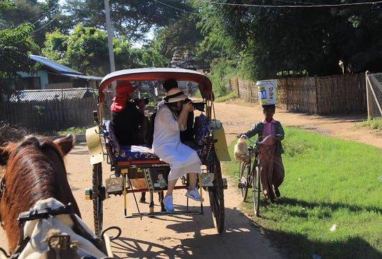 Horse Cart 144 Photo