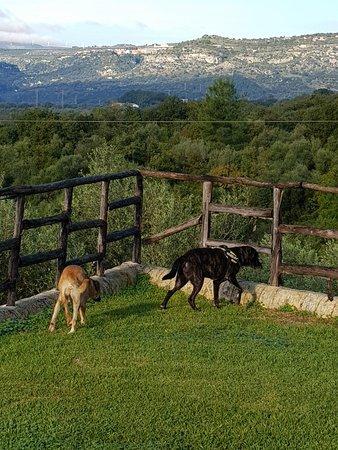 Pantalica Ranch: 20171116_083531_large.jpg