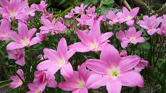 Thepha, Thailand: ทุ่งดอกไม้
