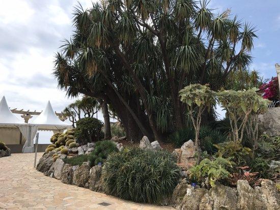 plantas ex ticas picture of jardin exotique de monaco. Black Bedroom Furniture Sets. Home Design Ideas