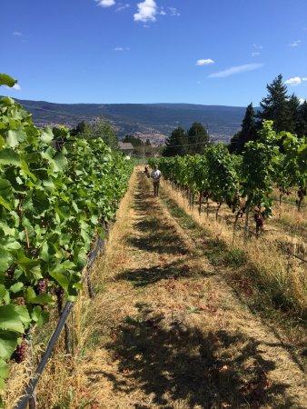 Summerland, Kanada: Sage Hills Vineyards