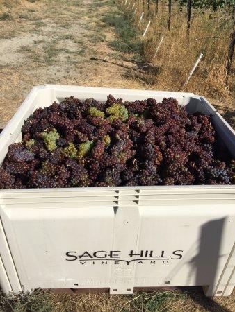 Summerland, كندا: Sage Hills Vineyards