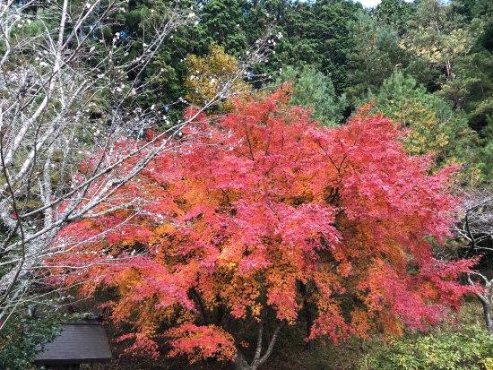 Shusse Inari Shrine