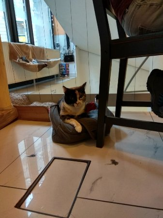 Cat Cafe Budapest Reviews