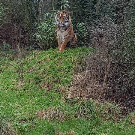 South Lakes Safari Zoo: IMG_20171123_202646_076_large.jpg