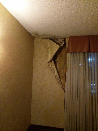Plaza Hotel: IMAG0020_large.jpg