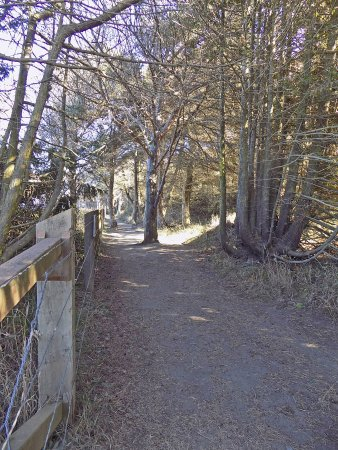 Sequim, WA: The trail along the bluff above the Sound.
