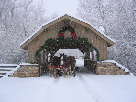 Covered Bridge Ranch: Christmas Trees @the Covered Bridge