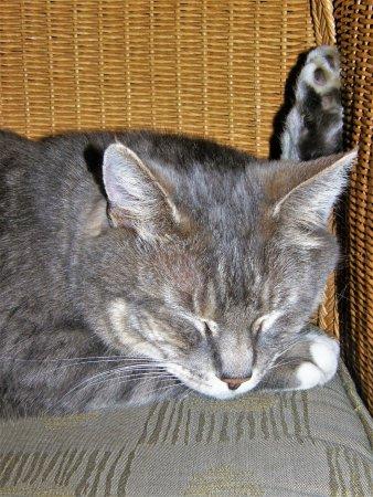 Union, WA: Resort cat Brook